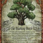 The Blushing Beech greetings card