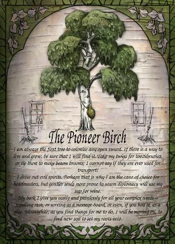 The Pioneer Birch greetings card