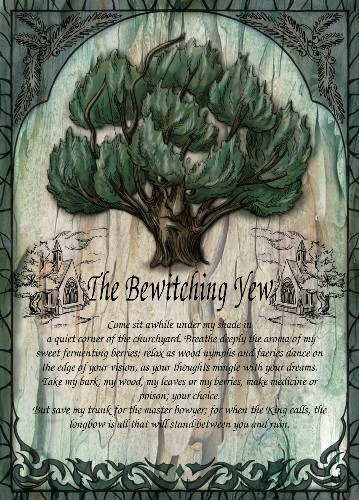 The Bewitching Yew greetings card